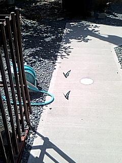 蝶々のタンデム飛行?