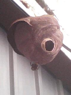 蜂の巣:反対側も増設なう