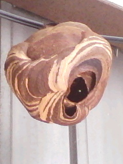 蜂の巣:スクラップ&ビルド